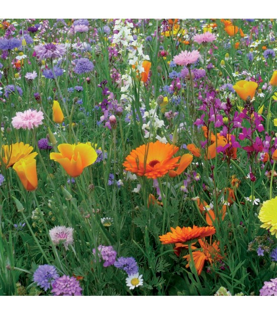 prairie fleurie courte et vivace sur jardin biodiversit. Black Bedroom Furniture Sets. Home Design Ideas