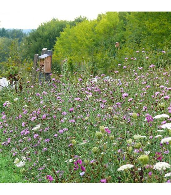Mélange de fleurs sauvages : Natura papillon   Jardin ...
