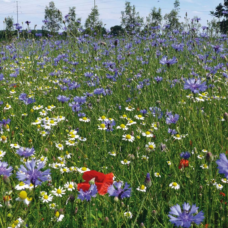 Fleurs de jardin sauvage jardin de fleurs sauvages for Fleurs de nos jardins
