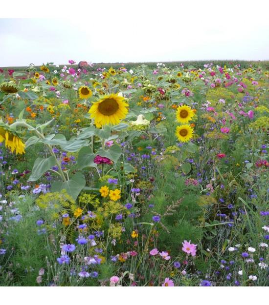 Jach re fleurie annuelle farondole jardin biodiversit - Fleur de jachere ...