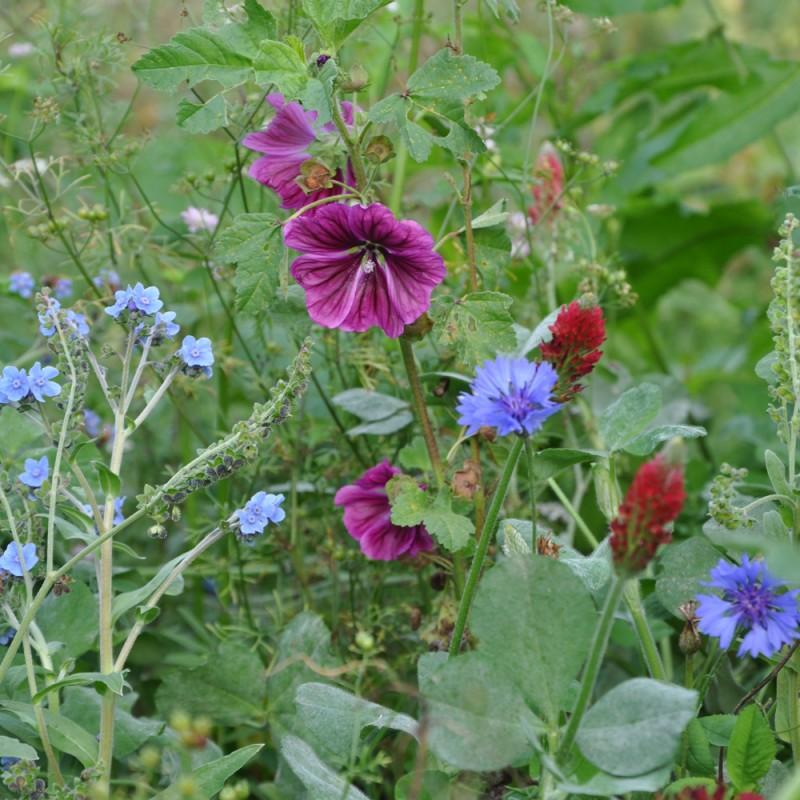 offrez à votre jardin une jachère mellifère pour attirer les