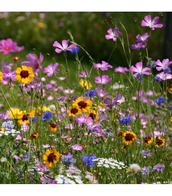 Prairie Fleurie Nova-Flore - Harmonie