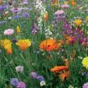Tom-Pouce Durable - Prairie Fleurie