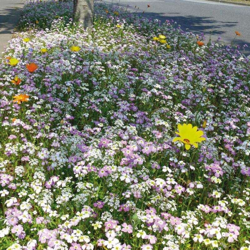 Prairie fleurie courte et vivacepour am nager jardins et for Jardins et espaces verts
