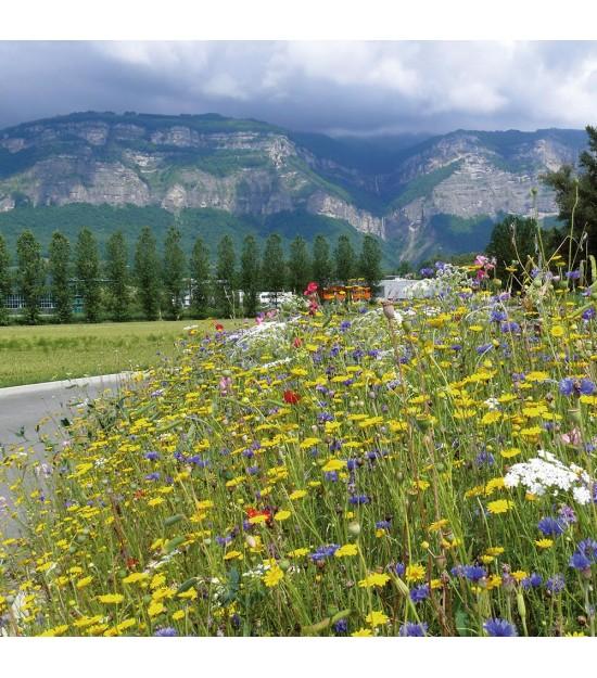 Prairie Fleurie - Aquarel vivace