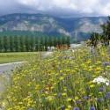 Aquarel vivace - Prairie Fleurie