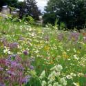 5 sens - Prairie fleurie