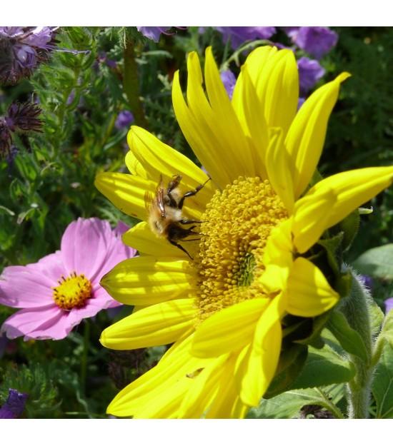 Miellée annuelle Connect