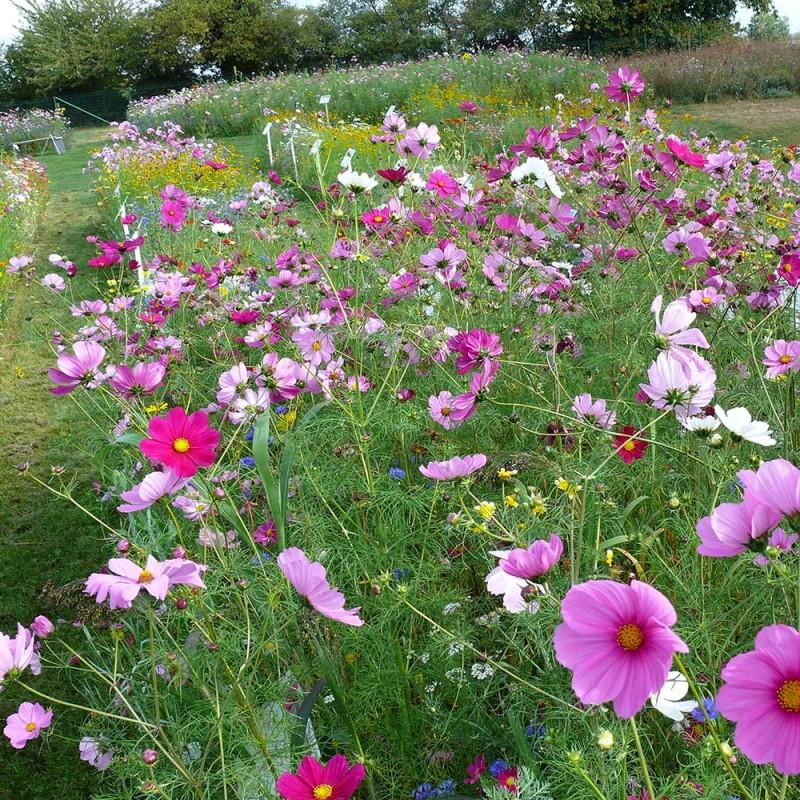 M lange de fleurs pour oiseaux jardin biodiversit - Pour effrayer les oiseaux ...