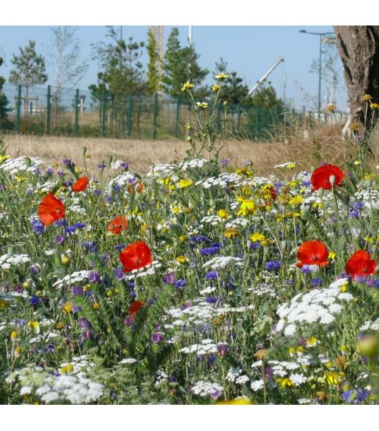 prairie fleurie bord de route cologique jardin biodiversit. Black Bedroom Furniture Sets. Home Design Ideas