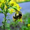Natura pollinisateurs sauvages