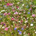 Pastels d'été - Prairie Fleurie