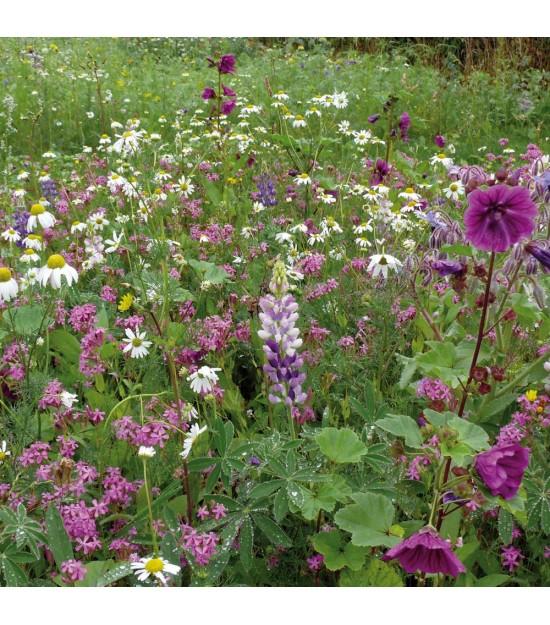 Prairie fleurie vivace : Équinoxe | Jardin Biodiversité