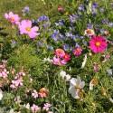 Tom-Pouce Pastel - Prairie Fleurie