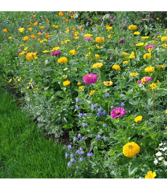 Virtuose - Prairie Fleurie