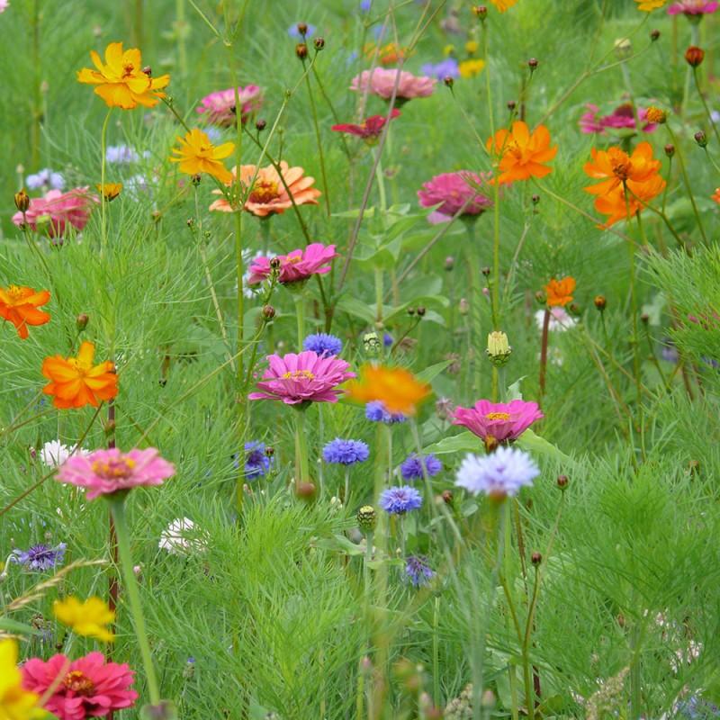 jach re fleurie annuelle st hubert jardin biodiversit. Black Bedroom Furniture Sets. Home Design Ideas