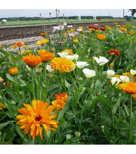 Jachère Fleurie pour le Jardin - Hirondelle