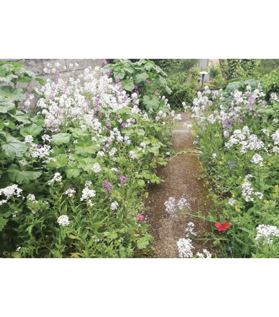 Zone ombrée - Prairie Fleurie