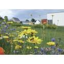 Mélange Protection du potager - fleurs courtes