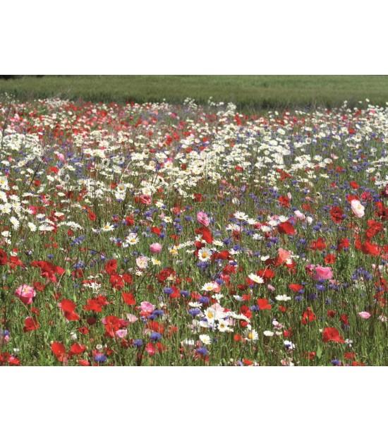 Fleurs d'antan - Jachère Fleurie