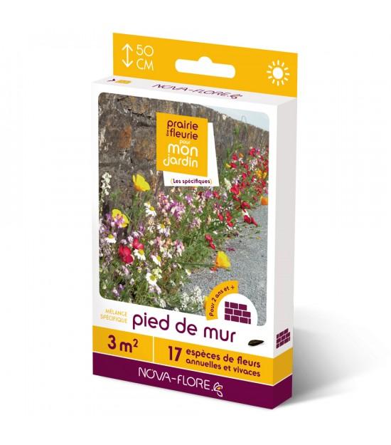 """Prairie fleurie vivace pour """"Pied de Mur"""""""
