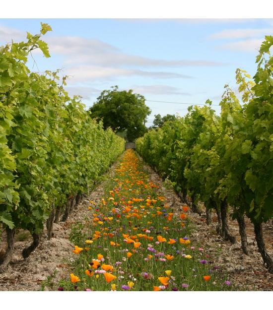 Déco vignes annuelles - Jachère Fleurie