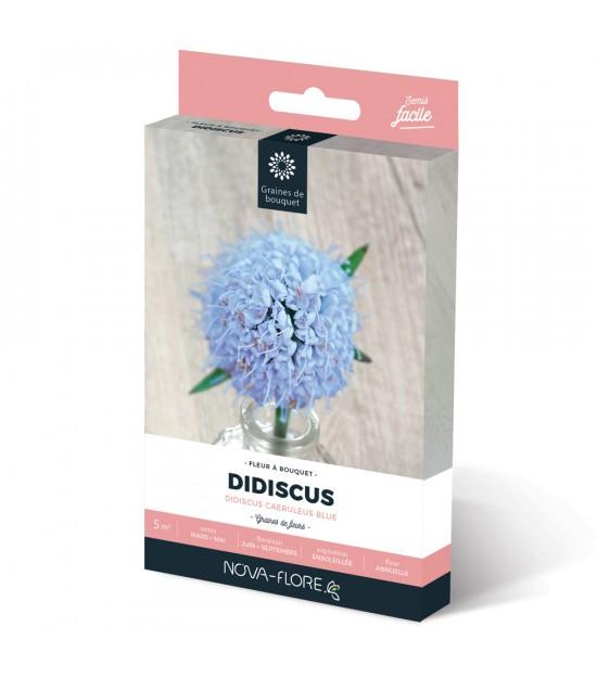 Didiscus