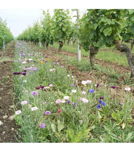 Déco vignes vivaces - Jachère Fleurie