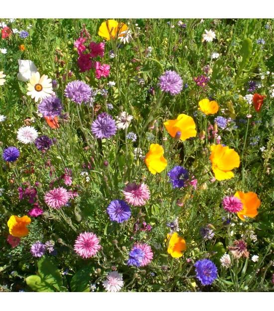 Prairie Fleurie de Nova-Flore - Nova-Déco