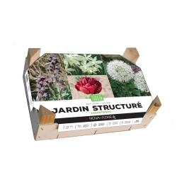 Assortiment Structuré 25 Bulbes