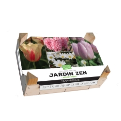 Assortiment Zen 40 Bulbes